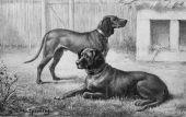 zobrazí detail - Canis Media BC0181