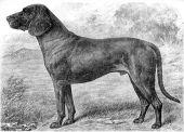 zobrazí detail - Canis Media BC0253