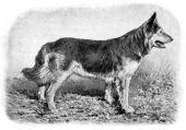 zobrazí detail - Canis Media BC0270