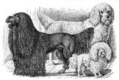 zobrazí detail - Canis Media BC0435