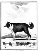 zobrazí detail - Canis Media BC0531