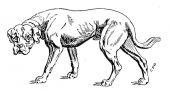 zobrazí detail - Canis Media BC0613