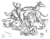 zobrazí detail - Canis Media BC0639