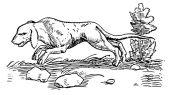 zobrazí detail - Canis Media BC0640