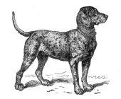 zobrazí detail - Canis Media BC0675