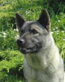zobrazí detail - Canis Media DB1111409
