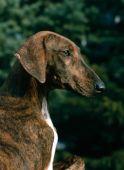 zobrazí detail - Canis Media DB111A125