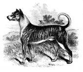 zobrazí detail - Canis Media STH04